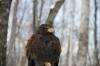 鷹か鷲か鳶