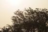 朝焼けの中の木
