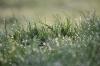 朝焼けと朝露と雑草